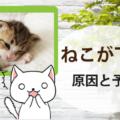 【ねこが下痢をした!?】猫の下痢の原因と予防