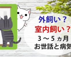 外飼い室内飼い?3ヵ月~5ヵ月の猫