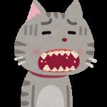 pet_ha_byouki_cat