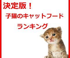 子猫ランキング
