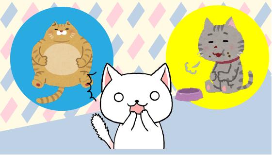 5 どんな猫におすすめ?