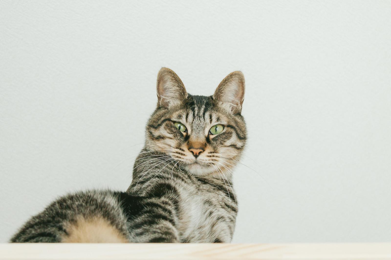 モグニャンキャットフードの口コミをくれた雑種猫