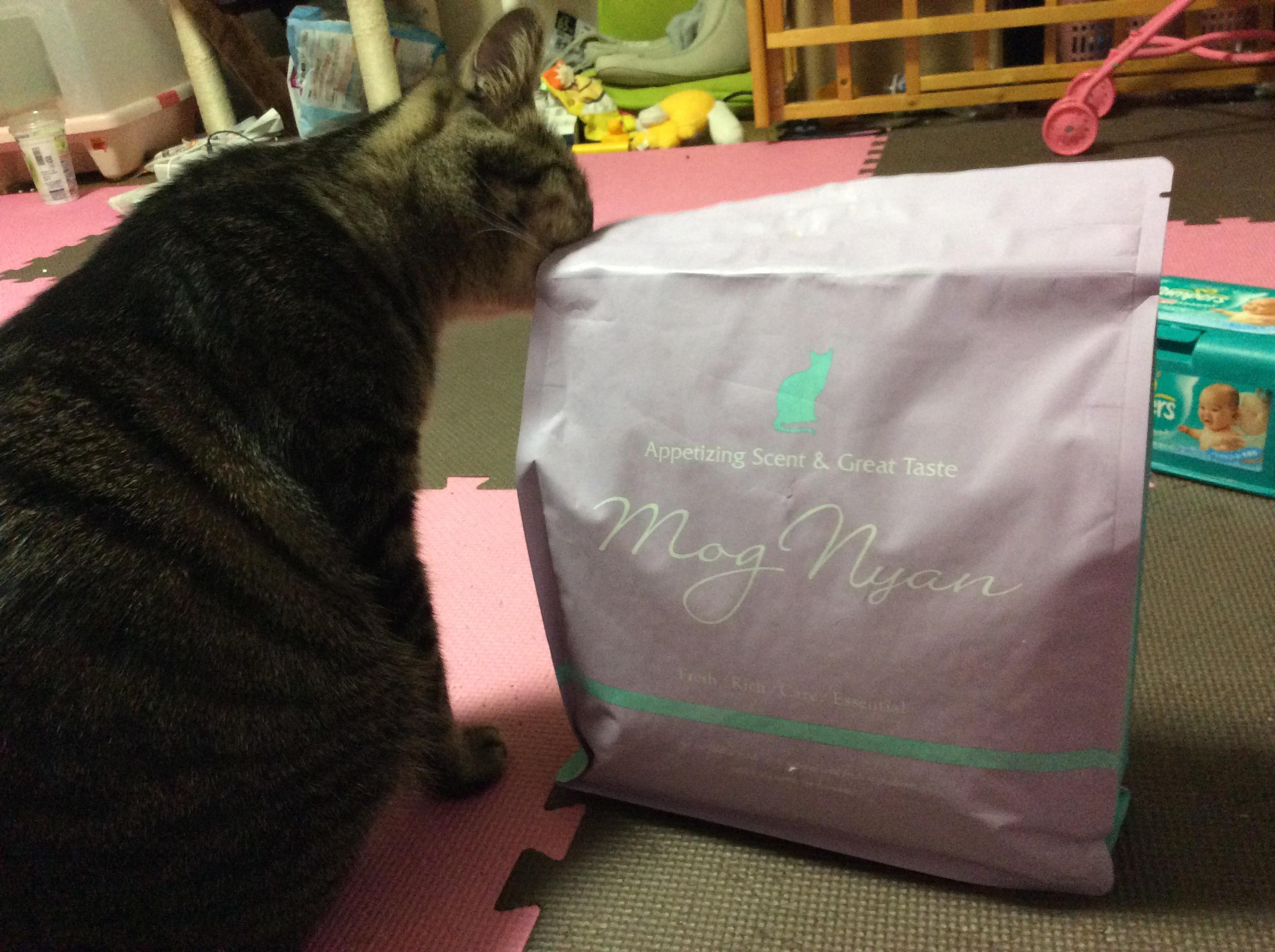 モグニャンキャットフードの匂いをかぐ猫
