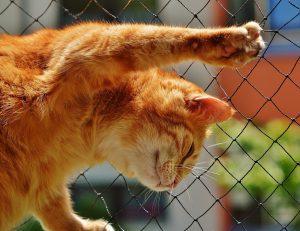 ピュリナワンキャットフードをチェックしている猫
