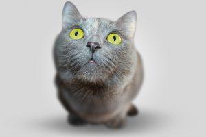 ファーストチョイスを食べたい猫
