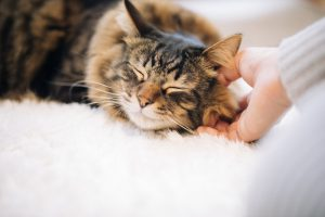 ザナベレキャットフードの魅力を確認する猫
