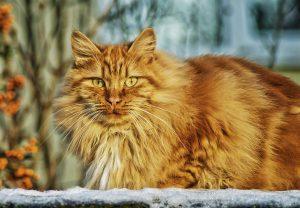 アニモンダのキャットフードの種類について知りたい猫