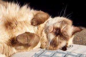 カルカンのキャットフードを食べてみたい猫