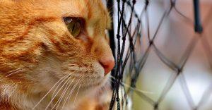 ロータスキャットフードが好きな猫