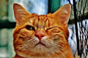 モグニャンキャットフードとジャガーキャットフードを比較しているグルメな猫
