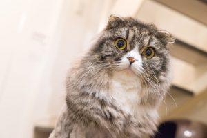 ザナベレキャットフードを食べたい猫