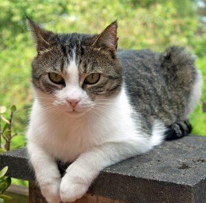 キャラットミックスキャットフードを食べたい猫