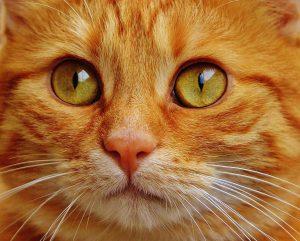 グレインフリーのキャットフードのランキングが気になる猫