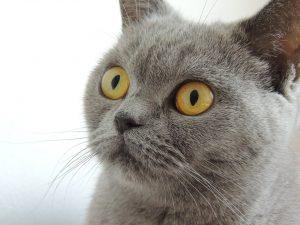 ピュリナワンキャットフードを食べてみたいと考えている猫