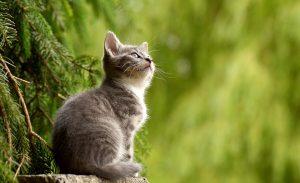 カルカンのキャットフードの風味が嬉しい子猫