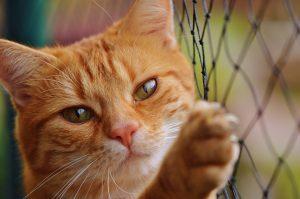 ロータスキャットフードを心待ちにするグルメな猫