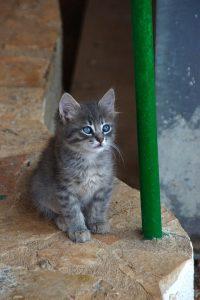 キャラットミックスキャットフードについて気になる猫