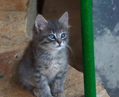 キャラットミックスキャットフードが気になる猫