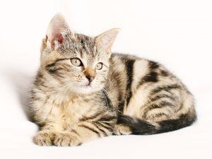 モグニャンとシンプリーを比較している猫