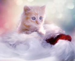 キャットフードを食べたい子猫