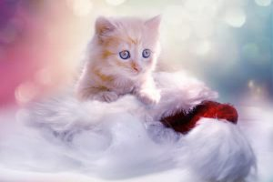 アイムスのキャットフードを食べたい子猫