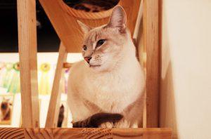カークランドキャットフードのことが気になる猫