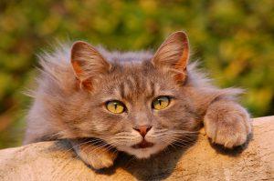 グレインフリーを確認したい猫