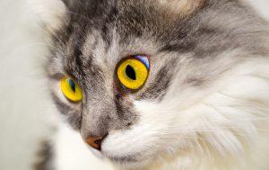グレインフリーのキャットフードなのか確認している猫