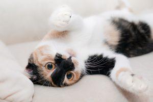 グレインフリーのキャットフードを食べたがっている猫