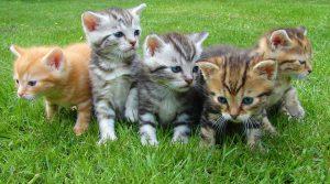 多頭飼いされている猫達