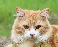 セレクトバランスの猫