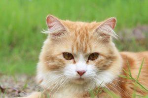 セレクトバランスのキャットフードに熱視線の猫