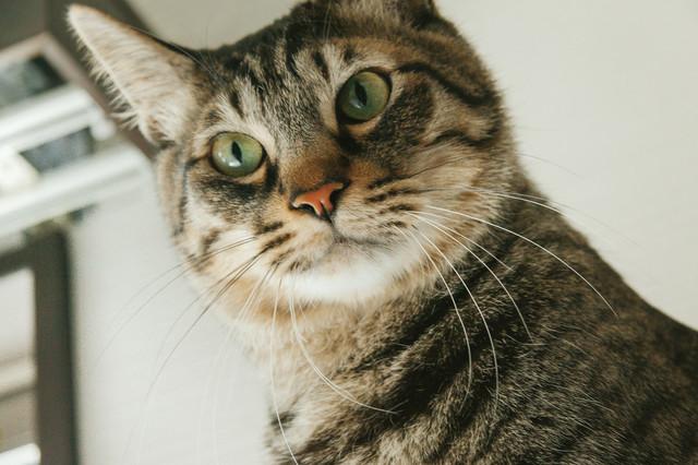 人間と話したい猫