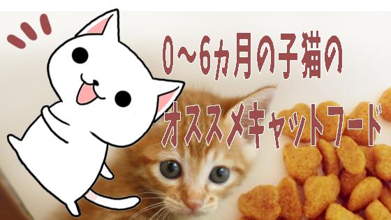 0〜6ヵ月の子猫のオススメキャットフード