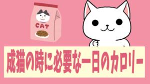 成猫の時に必要な一日のカロリー