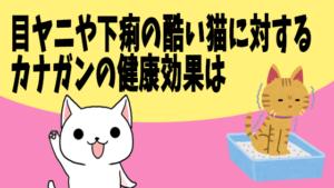 目ヤニや下痢の酷い猫に対するカナガンの健康効果は