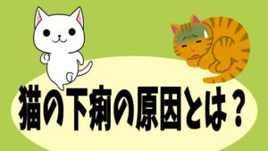 猫の下痢の原因とは?