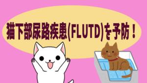 猫下部尿路疾患