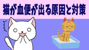 猫が血便が出る原因と対策