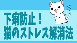 下痢防止!猫のストレス解消法