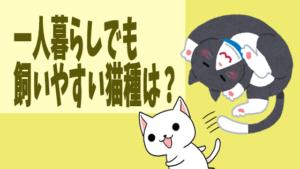 一人暮らしでも飼いやすい猫種は?