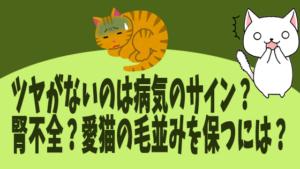 ツヤがないのは病気のサイン?腎不全?愛猫の毛並みを保つには?