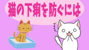 猫の下痢を防ぐには