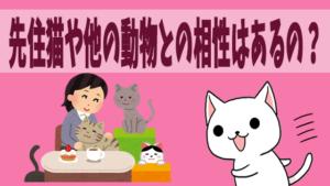先住猫や他の動物との相性はあるの?