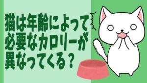 猫は年齢によって必要なカロリーが異なってくる?